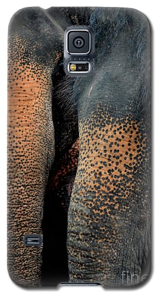 Galaxy S5 Case featuring the photograph Two Pals by Michelle Meenawong