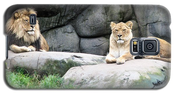 Two Tranquil Lions Galaxy S5 Case