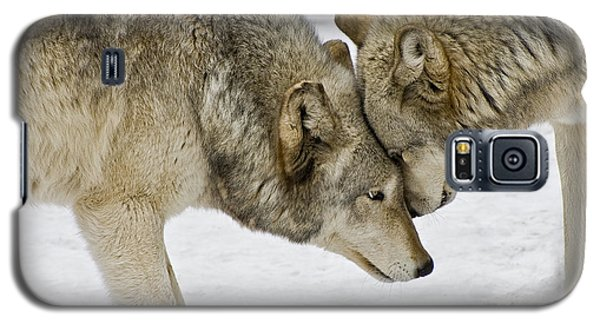 Galaxy S5 Case featuring the photograph Two Wolves In  A Staredown by Gary Slawsky