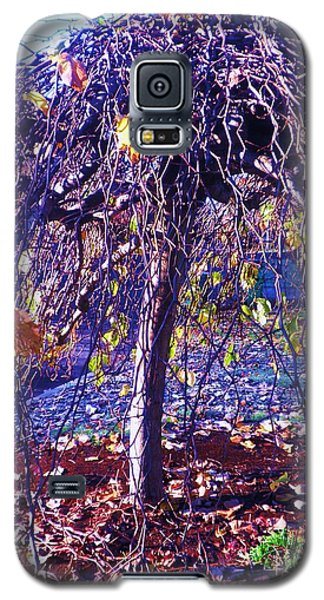 Galaxy S5 Case featuring the photograph Umbrella Tree In Fall by Suzanne McKay