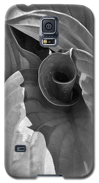 Uncoiling Hostas Galaxy S5 Case