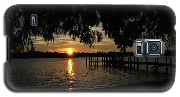 Under The Bald Cypress Galaxy S5 Case by Michele Kaiser
