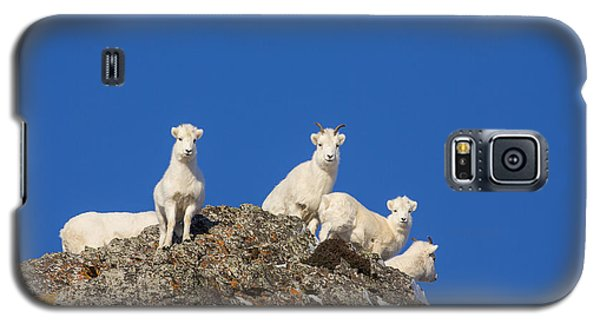 Sheep Galaxy S5 Case - Under The Blues Skies Of Winter by Tim Grams