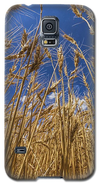 Galaxy S5 Case featuring the photograph Under The Wheat by Rob Graham