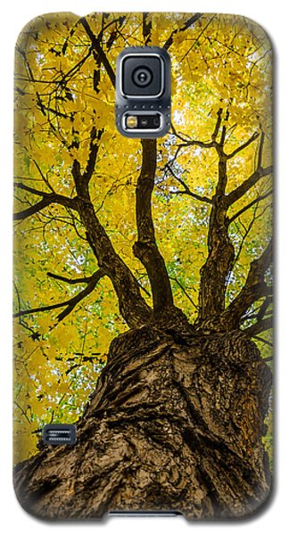 Under The Yellow Canopy Galaxy S5 Case by Debra Martz
