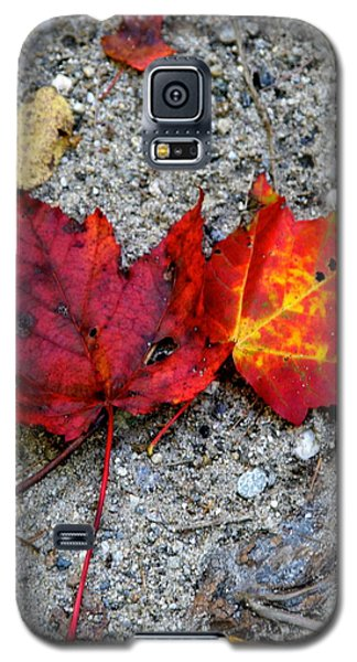 Underfoot Galaxy S5 Case by Mary Sullivan