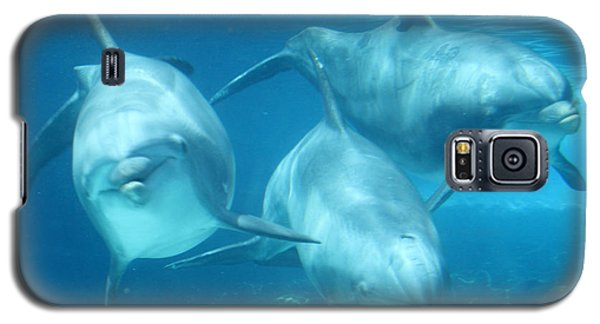 Underwater Dolphin Encounter Galaxy S5 Case by David Nicholls