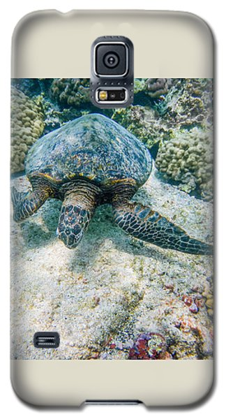Swimming Turtle Galaxy S5 Case