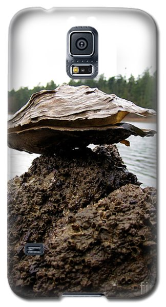 Galaxy S5 Case featuring the photograph Untitled by Devin  Cogger