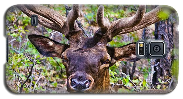 Galaxy S5 Case featuring the photograph Up Close And Personal With An Elk by Bob and Nadine Johnston