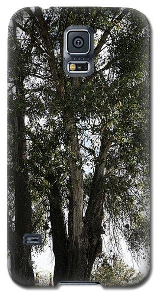 Up-view Of Oak Tree Galaxy S5 Case
