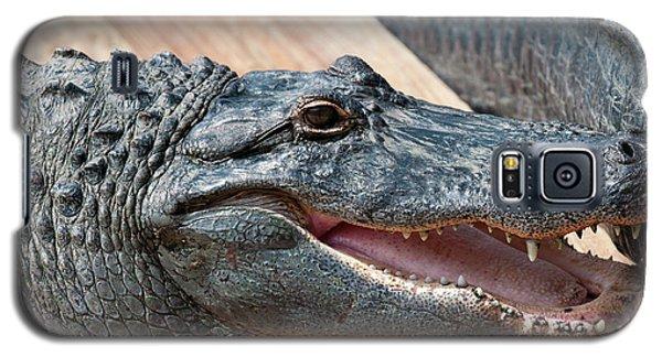 Usa, Florida Gatorland, Florida Galaxy S5 Case by Michael Defreitas