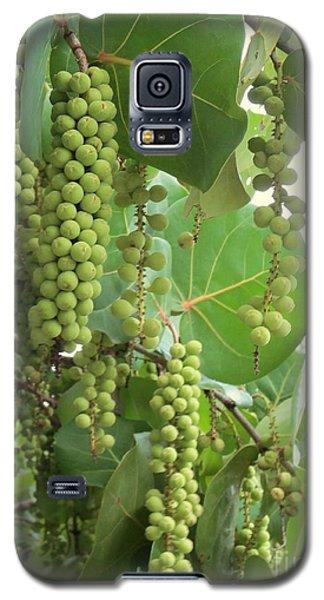 Uvas Parras Galaxy S5 Case