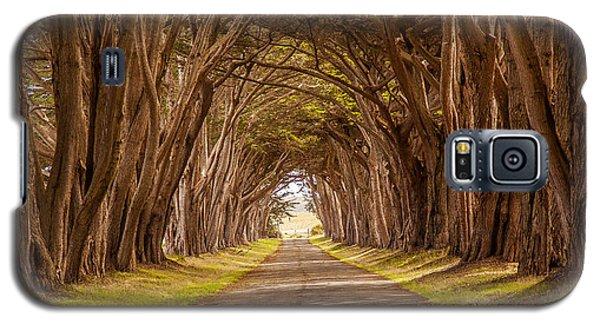 Valiant Trees Galaxy S5 Case