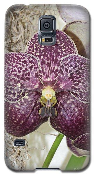 Vanda Robert's Delight Galaxy S5 Case