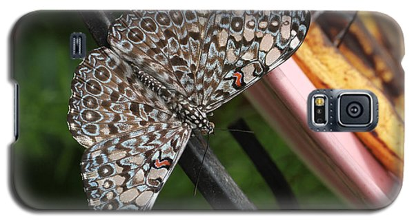 Galaxy S5 Case featuring the photograph Variable Craker Butterfly #2 by Judy Whitton