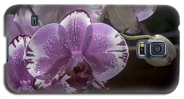 Variegated Fuscia And White Orchid Galaxy S5 Case
