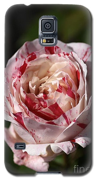 Galaxy S5 Case featuring the photograph Variegated Rose by Joy Watson