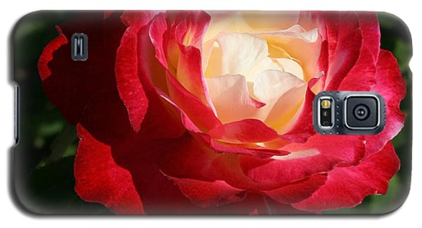 Variegated Rose Galaxy S5 Case