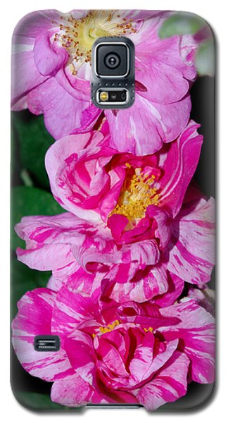 Galaxy S5 Case featuring the photograph Variegated Roses by Adria Trail