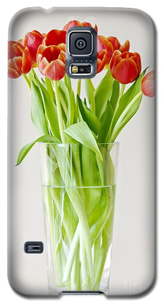 Vase Of Tulips Galaxy S5 Case by Dee Cresswell