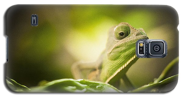 Veiled Chameleon Is Watching You Galaxy S5 Case