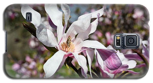 Velvet Galaxy S5 Case by Julie Andel