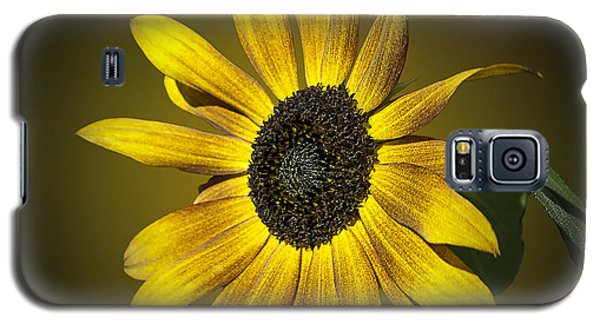 Velvet Queen Sunflower Galaxy S5 Case