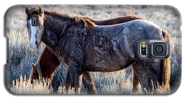Velvet - Young Colt In Sand Wash Basin Galaxy S5 Case