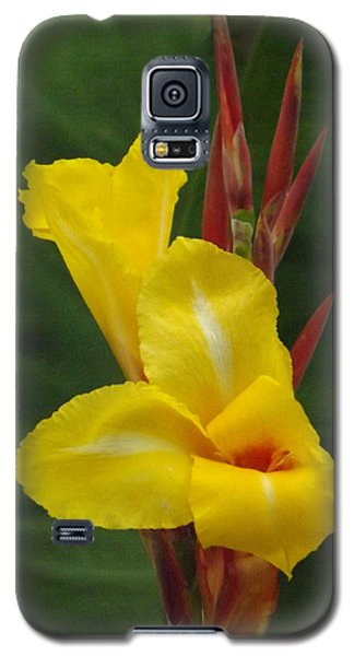 Velvety Yellow Iris  Galaxy S5 Case