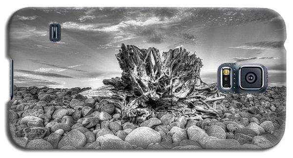 Ventura River Tree Galaxy S5 Case