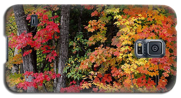 Vermont October Woods Galaxy S5 Case by Alan L Graham