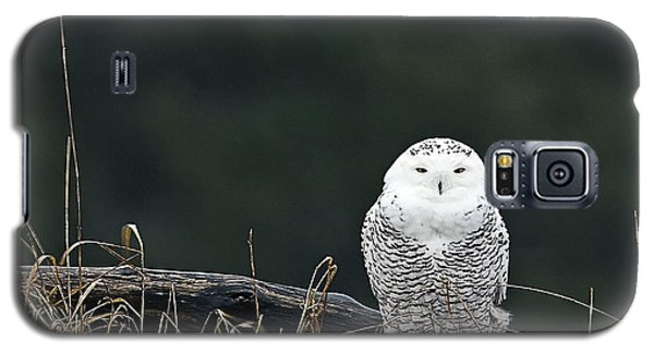 Vermont Snowy Owl Galaxy S5 Case