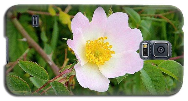 Vert Jaune Rose Galaxy S5 Case