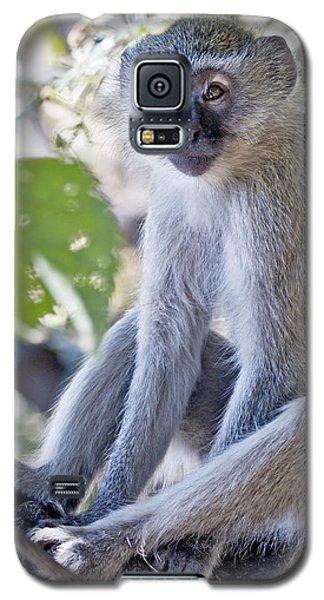 Vervet Monkey Galaxy S5 Case