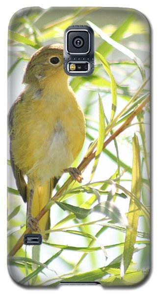 Galaxy S5 Case featuring the photograph Very Yellow Warbler by Anita Oakley