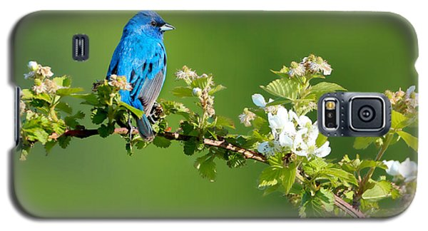Bunting Galaxy S5 Case - Vibrance Of Spring by Rob Blair