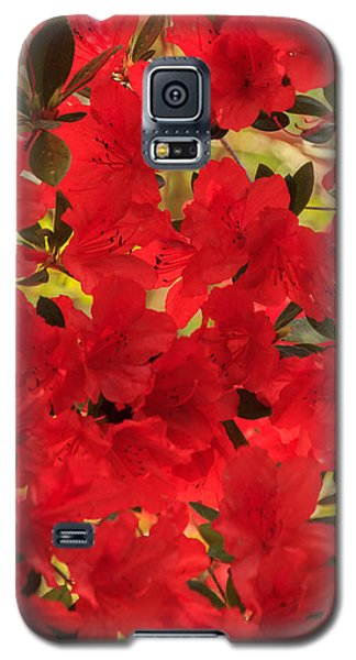 Galaxy S5 Case featuring the photograph Vibrant Azalea by Patricia Schaefer