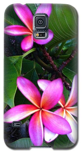 Vibrant Plumeria Galaxy S5 Case