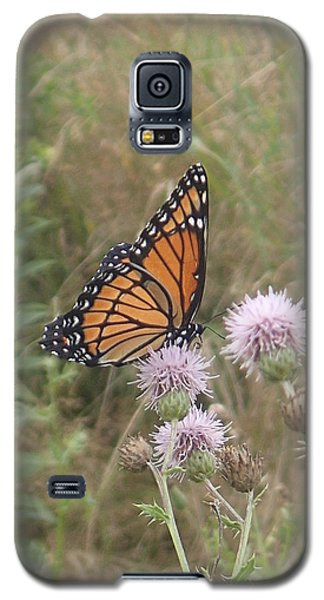 Galaxy S5 Case featuring the photograph Viceroy On Thistle by Robert Nickologianis