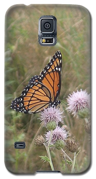 Viceroy On Thistle Galaxy S5 Case by Robert Nickologianis