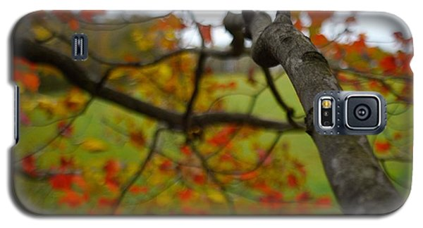 Galaxy S5 Case featuring the photograph View From A Tree by Alex King