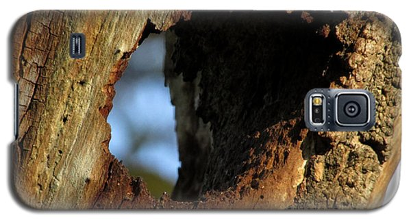Galaxy S5 Case featuring the photograph View Through A Tree by Kimberly Mackowski