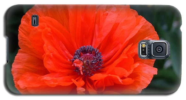 Galaxy S5 Case featuring the photograph Village Poppy by Francine Frank