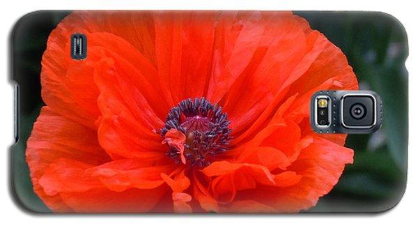 Village Poppy Galaxy S5 Case by Francine Frank