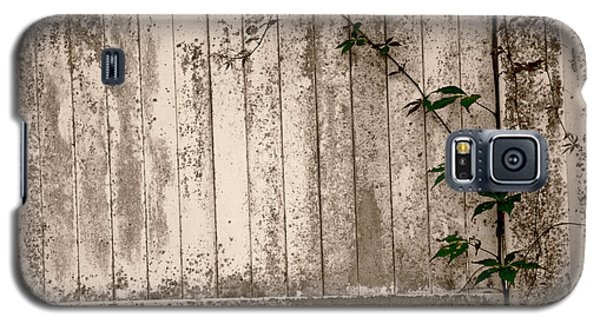 Galaxy S5 Case featuring the photograph Vine And Fence by Amanda Vouglas