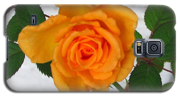 Galaxy S5 Case featuring the photograph Vine And Rose by Gayle Price Thomas