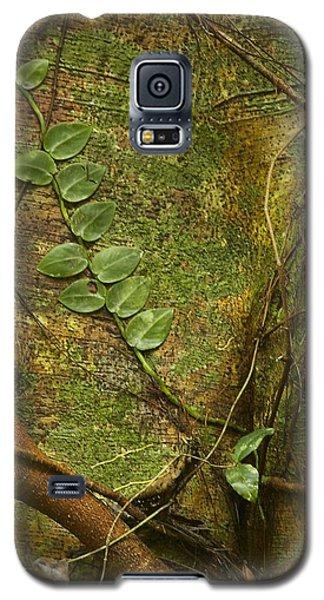 Vine On Tree Bark Galaxy S5 Case by Stuart Litoff
