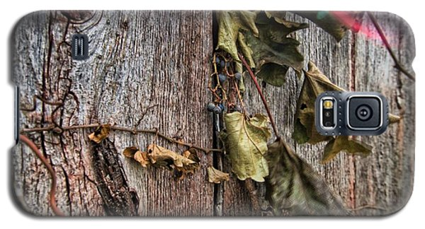 Vines And Barns Galaxy S5 Case by Daniel Sheldon