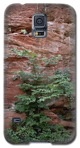 Vines And Canyon Walls Galaxy S5 Case